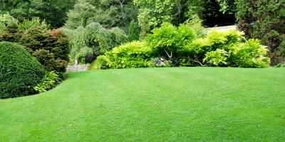 Jamaica Lawn Care Quotes